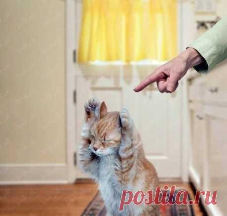 Отучаем кота метить территорию в доме | Кот и Кошка | Яндекс Дзен