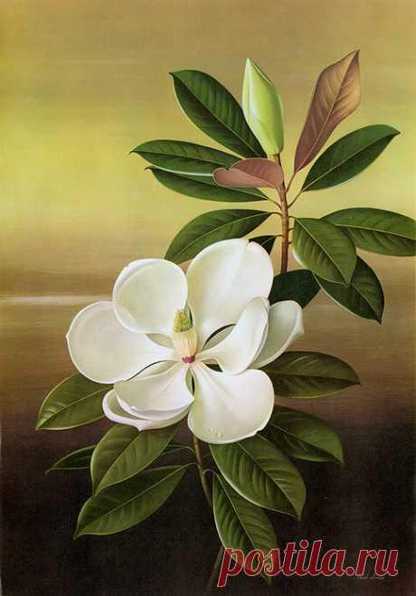 Paul Jones Flora Magnifica & Flora Superba. Цветочные иллюстрации.