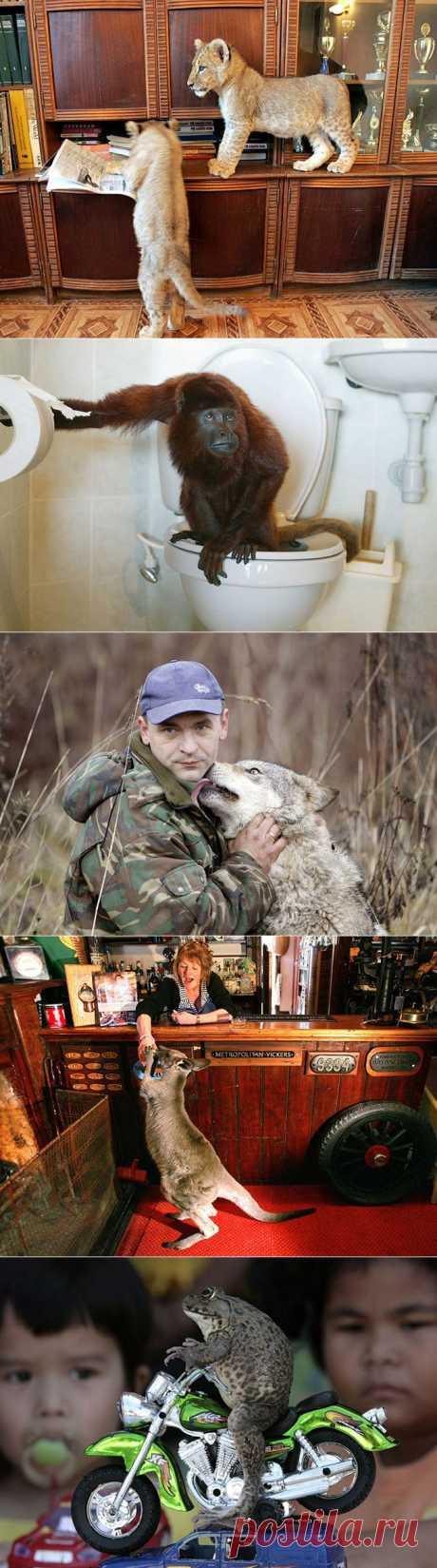 Необычные домашние животные | Fresher - Лучшее из Рунета за день