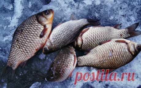 Зимняя ловля карася: секрет успешного улова | Хорошая рыбалка | Яндекс Дзен