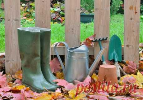 7 дел, которые нужно сделать в саду в ноябре   Уход за садом (Огород.ru)