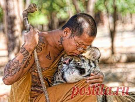 (+1) тема - Гуманному отношению к животным посвящается. | Четвероногий юмор
