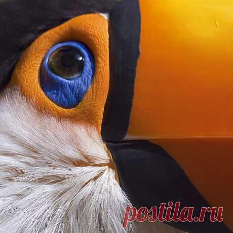 Тукан......))))))))