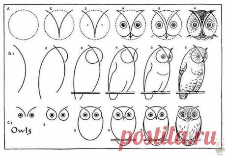 Учимся рисовать сов сами :) / Еда и напитки / своими руками / Pinme.ru / OXXA
