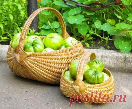 Как ускорить дозревание зеленых томатов