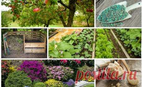 Осенние удобрения – чем подкормить сад, огород и цветник в конце сезона - Садоводка