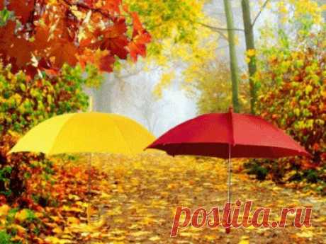 - Яркая осень