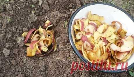 Для чего смородину нужно подкармливать картофельными очистками | Мой сад и огород | Яндекс Дзен