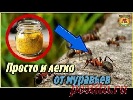 Как ИЗБАВИТЬСЯ от МУРАВЬЕВ на участке НАВСЕГДА Простое и доступное НАРОДНОЕ СРЕДСТВО от муравьев