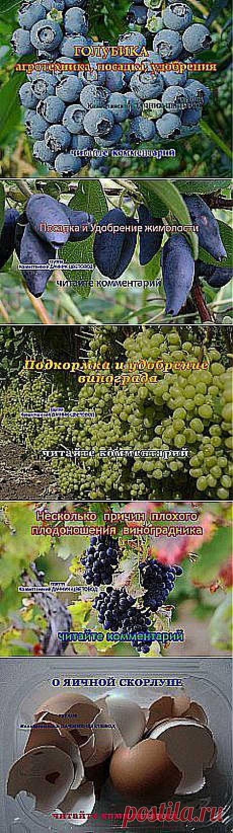 Надежда Федоренко: Сад огород   Постила