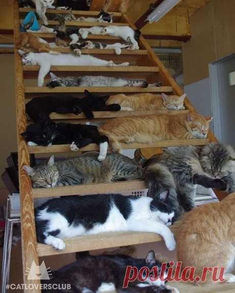 Для сна нет преград: 35 фото котов, которые это доказали | Я есть Любовь