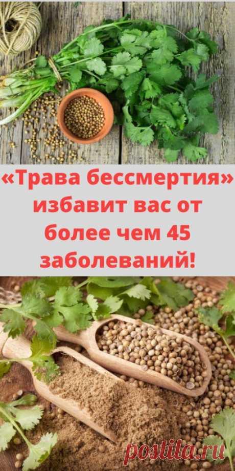 «Трава бессмертия» избавит вас от более чем 45 заболеваний! - My izumrud