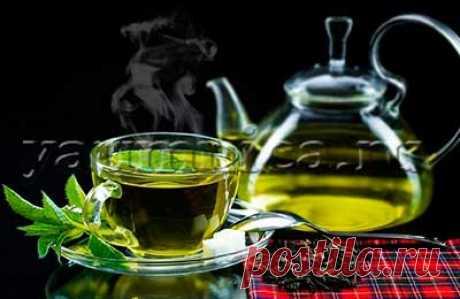 Зеленый чай для похудения: отзывы, применение, противопоказания