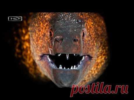Ночной хищник с сильным обонянием и крепкими челюстями в которых сотня острых как бритва зубов