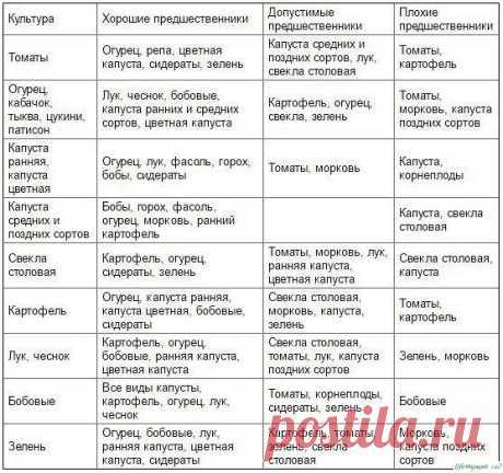 Таблица чередования посевов овощей в огороде — Садоводка