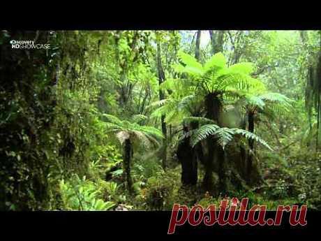 ▶ Выжить любой ценой.Новая Зеландия. Южный остров (sezon 7x2)HD - YouTube