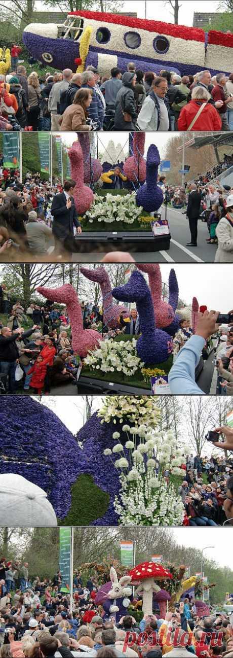 Парад цветов в Голландии.