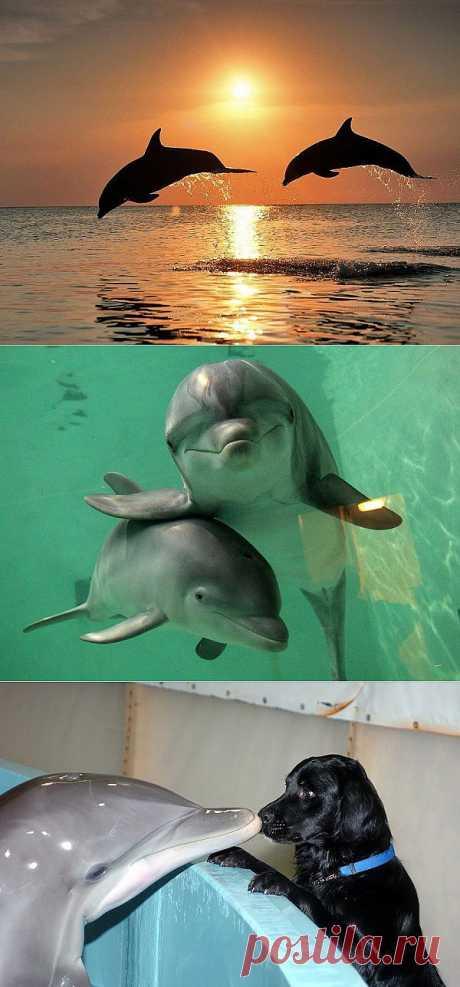 Самые удивительные факты о дельфинах : НОВОСТИ В ФОТОГРАФИЯХ