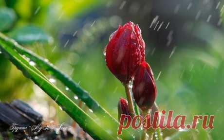 Мне нравится, когда идут дожди Земные, тёплые, без тени на ненастье… Мне нравится в спокойствии души Молчание, похожее на счастье...