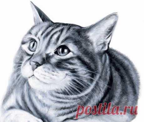 Рисуем котика: мастер-класс