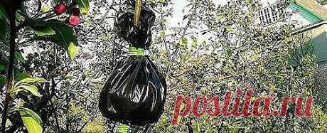 Почти в каждом саду есть любимая яблоня, название сорта которой давно забыто, а яблоки такие вкусные, что хочется сохранить дерево на долгие года. Как же это сделать? Яблоня все стареет и стареет, а прививка черенка на подвой — не самое простое дело, далеко не у всех получается. Выход есть!  Оказывается, получить свой собственный сортовой саженец можно и без прививки. Для этого применяют древний, незаслуженно забытый и при этом удивительно простой способ размножения плодо...
