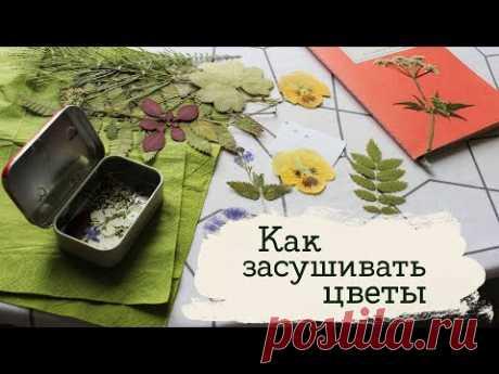 Где взять сухоцветы? | Masherisha