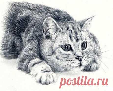 Многие люди похожи на одичавших котов... С виду такие важные, независимые и грозные, но всегда мурлычут, радуясь тому, что кто-то отважился их приласкать...