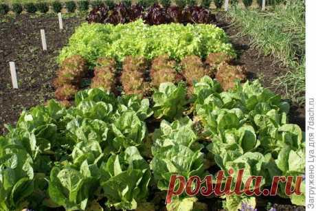 Зелень, которую можно посадить в сентябре — 6 соток