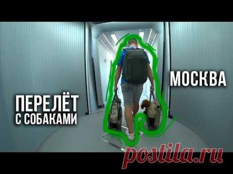 Перелёт с собакой / В Москве / Самый быстрый шопинг / 31.05.19