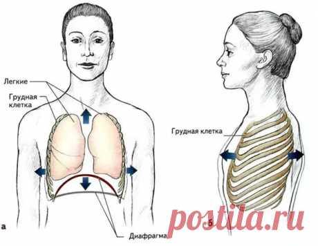 (46) Упражнения, которые научат вас дышать правильно - ПолонСил.ру - социальная сеть здоровья - медиаплатформа МирТесен