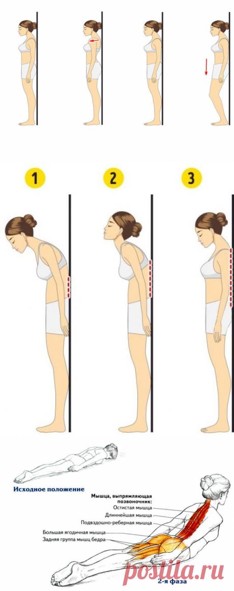 Омолаживающие 8 упражнений для укрепления спины  Эти упражнения укрепляют спину, снимают мышечное напряжение, дают ощущение бодрости и прилива жизненных сил. Спина – основа нашего опорно-двигательного аппарата, она поддерживает всё тело. И наша задача позаботиться о ее здоровье.