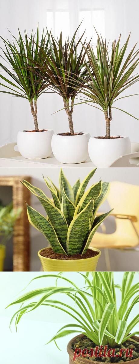Самые неприхотливые домашние растения, которые очищают воздух
