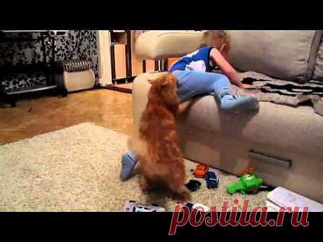 Кот играет с ребенком | NosKurnos.ru