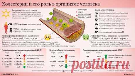 Норма холестерина в крови у женщин и мужчин по возрасту, таблица. Холестерин «плохой» и «хороший»