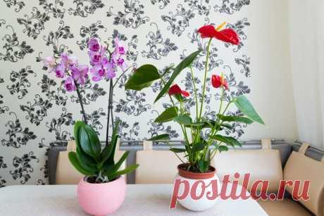 Почему антуриум не цветет в домашних условиях – растение требует заботливого ухода и не прощает ошибок - ЛАЙФСТАЙЛ-БЛОГ