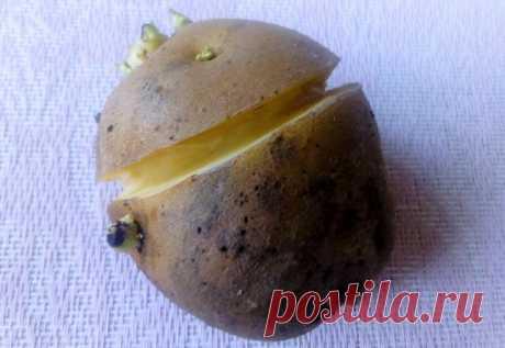Кербуем картофель, чтобы не было мелких клубней — по китайскому методу | Маленький сад на краю Вселенной | Яндекс Дзен