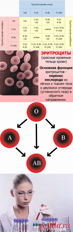 Может ли измениться группа крови? — Всё самое интересное!