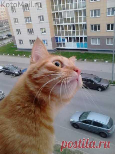 Любопытство - оно такое)