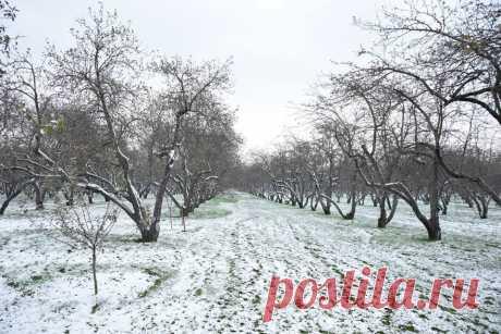 Снежное Коломенское