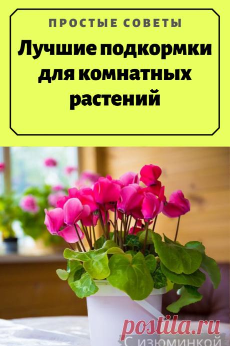 Лучшие подкормки для комнатных растений