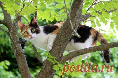 Правда ли, что трёхцветные кошки отличные охотники