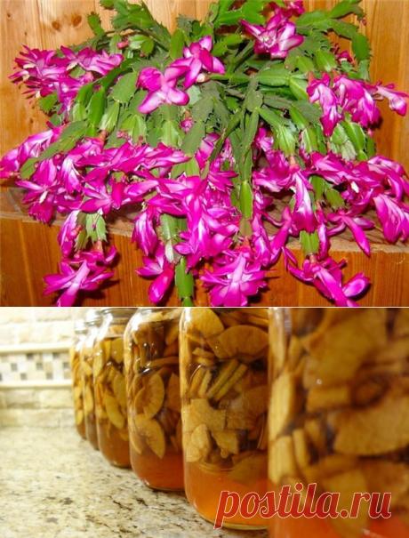Октябрь — пора подкармливать декабрист. 5 лучших средств для пышного цветения | Секреты сада. Дача, цветы | Яндекс Дзен
