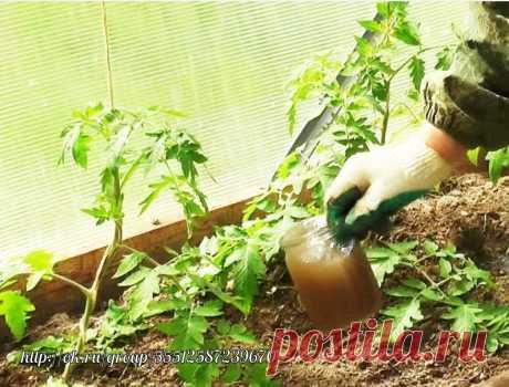 Йод в огороде  Обычный пузырек йода способен оказать огороднику не одну большую услугу. Поскольку все мы с детства знаем, что йод — отличный антисептик, грех не применить это его свойство в профилактике болезней растений, в особенности всяческих гнилей. Раствором 5-10 капель йода в десяти литрах воды рекомендуют опрыскивать клубнику и землянику перед цветением. Эта простая процедура избавит ее от серой гнили и активизирует жизненные силы.  Опрыскивание проводят 2-3 раза с интервалом в десять