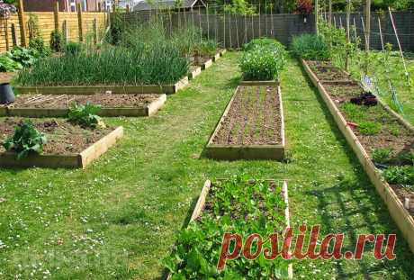 Как правильно обустроить огород: особенности распределения грядок и территории