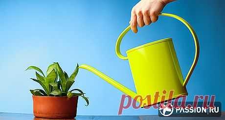 Как правильно поливать комнатные растения | passion.ru