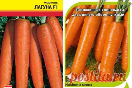 Морковь Лагуна: описание сорта, фото, отзывы, характеристика, достоинства и недостатки, особенности выращивания, урожайность