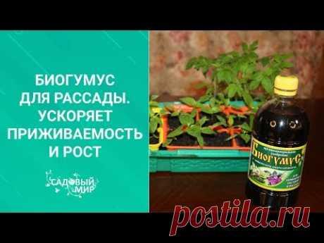 Биогумус для томатной рассады. Ускоряет приживаемость и рост