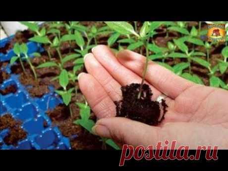 Как правильно приготовить почву для посадки рассады Дачные хитрости и полезные советы