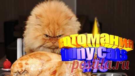 видео котов смешных, видео котов смешные, видео смешной кот, смешное видео кот, видео с котами, коты видео, видео котов, видео про кота, кота видео, видео животные смешные, животное смешное, смешное животное, про смешных животных, смешных животных, коты приколы, кот приколы, прикол коты, смешные коты, кошки смешные видео, смешная кошка, смешное кошки, видео смешных кошек, кошка смешное видео, смешно кошки, видео кошек смешные, кошек смешные, смешные кошка видео, кошка видео, смешной кот