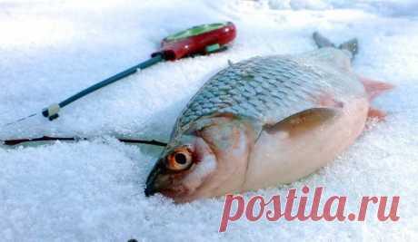 Эффективное применение чеснока на зимней рыбалке. Как применять, чтоб всегда клевало. | Буль буль карасики | Яндекс Дзен